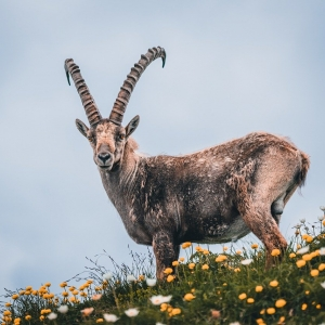 Symbolfoto Wildgehege Talwirt Hüttschlag