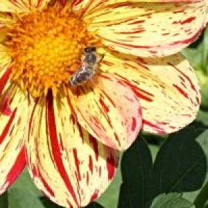 Bienenmuseum Carnica