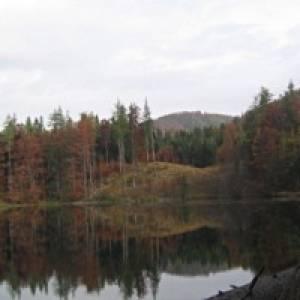 Wanderung zum Eibensee / Fuschl
