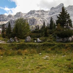 Wald Montafon