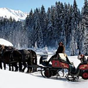 Pferdekutschen- und Pferdeschlitten-Fahrten in Hirschegg