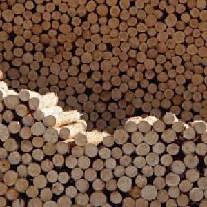 FeuerWerk - HolzErlebnisWelt