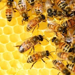 Bienen-Lehrpfad