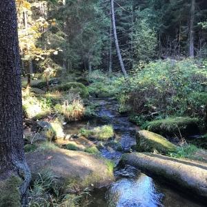 Bärentrail im Waldviertel