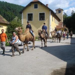 Kamelreiten in Weiten