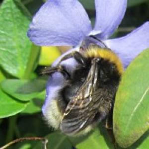 Maltataler Bienelehrpfad