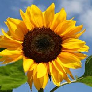 Sonnenlehrpfad Mariapfarr