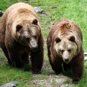Tierpark Wilde Berg Mautern
