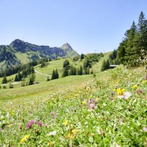 Pflanzenwelten-Weg