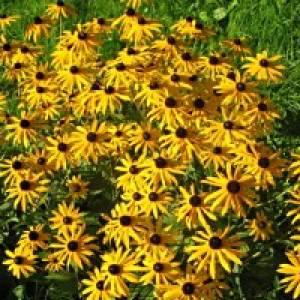 Blumenlehrpfad Rauris