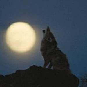 Tierwelt Herberstein Mondscheinführung