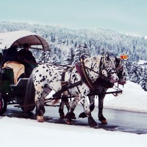 Pferdekutschen- und Schlittenfahrten in Eichenberg