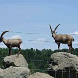 Wildpark Ernstbrunn