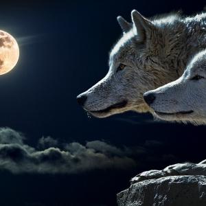 Symbolfoto Tierwelt Herberstein Mondscheinführung