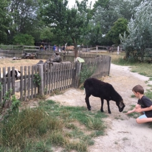 Mami-Check: Vienna Kids Farm