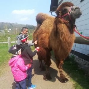 Mami-Check: Kamelreiten in Schlüsselberg