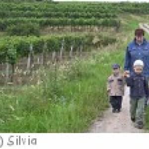 Weingartenführungen in Weiden am See