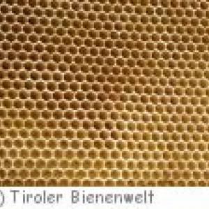 Tiroler Bienenwelt in Söll