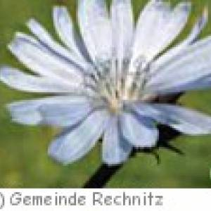 Bachblüten-Kraftpark im Schlosspark Rechnitz