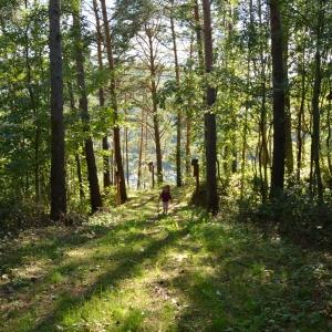Wald- und Vogellehrpfad in Schwarzenbach