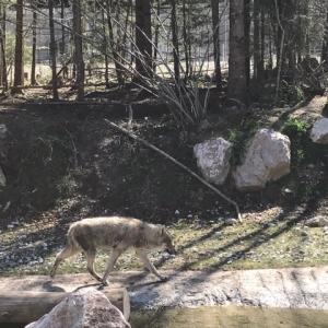 Cumberland Wildpark Grünau