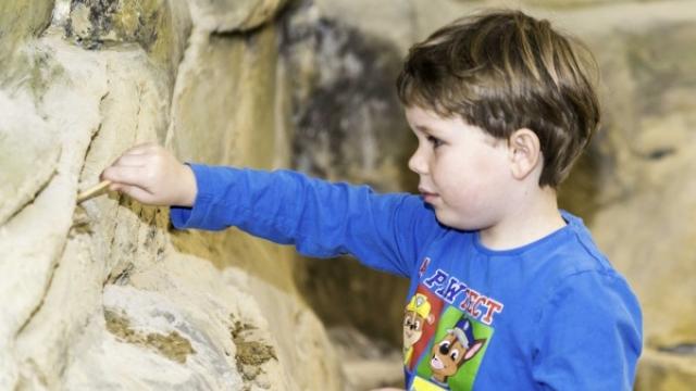 Mami-Check: Evolutionsmuseum Schmiding