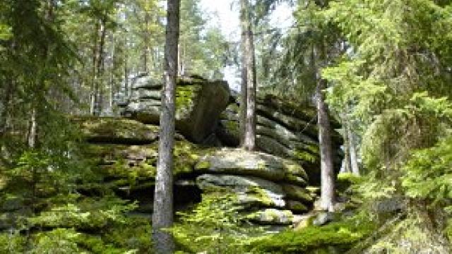 Waldlehrpfad Bregenz - Über den  Stadtforst zum Gebhardsberg