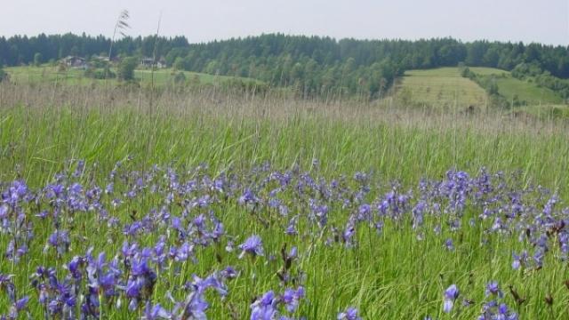 Finkensteiner Moor