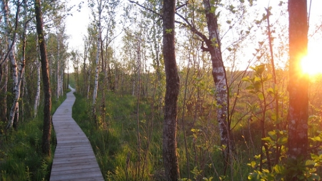 Wanderung durch das Ibmer Moor