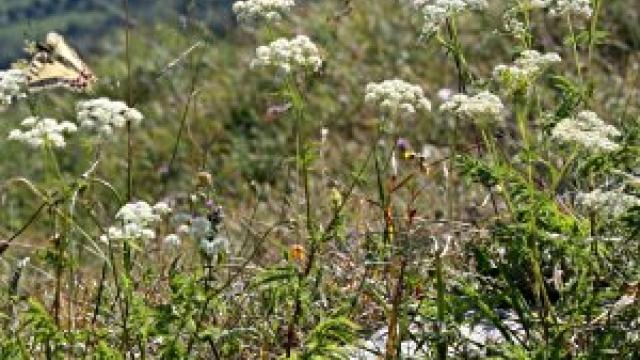 Natura Trail Sablatnigmoor