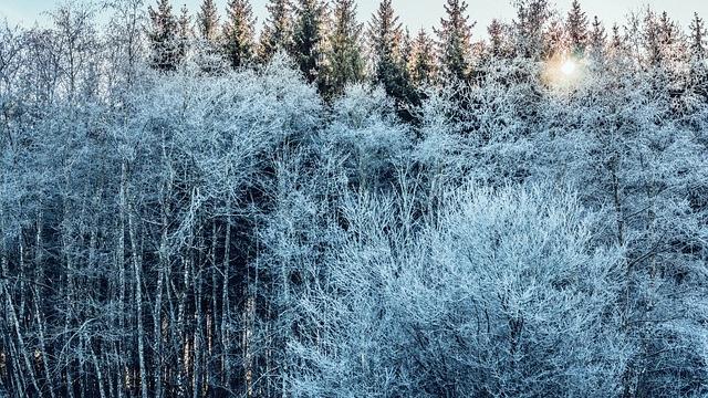Wald der Sinne im Naturpark Mürzer Oberlandquizweg Großgmain