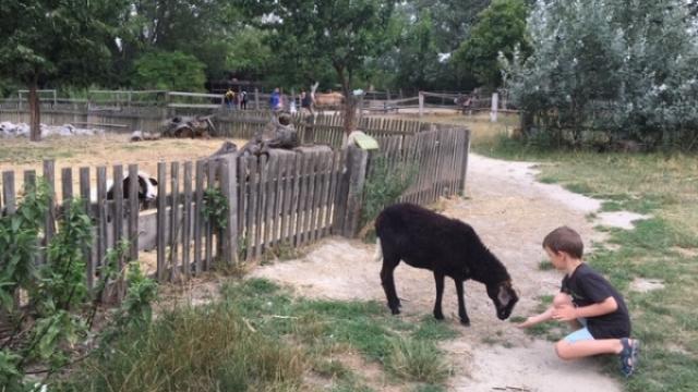 Mami-Check: Vienna Kids Farm