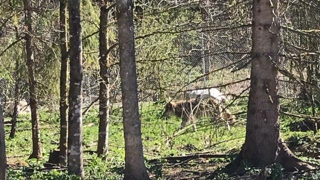 Mami-Check: Cumberland Wildpark Grünau